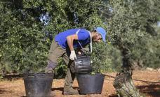 El regadío de Tierra de Barros ya tiene permiso para abastecerse de agua