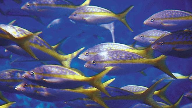 La acidificación de los océanos amenaza la supervivencia de los peces