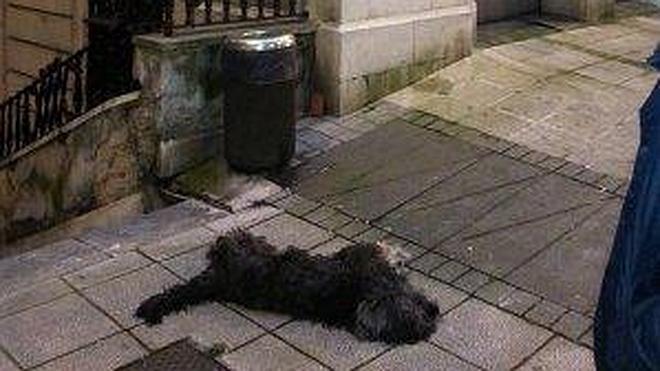 La muerte de un perro a patadas, en el juzgado