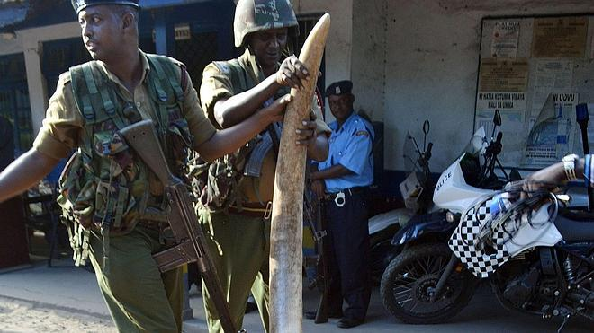 Una web para acabar con la impunidad de los cazadores furtivos