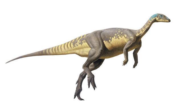 Descubierta una nueva especie de dinosaurio del Jurásico ibérico