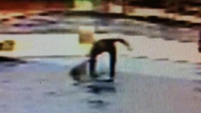 Denuncian un posible maltrato a delfines en el parque acuático Marineland Mallorca