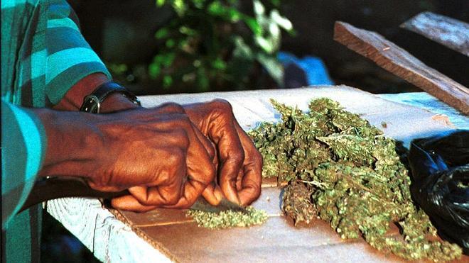 Jamaica despenaliza el consumo de marihuana