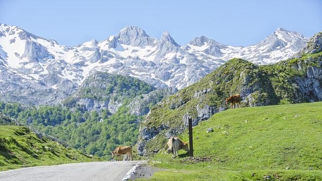 Rincones del Parque Natural de los Picos de Europa