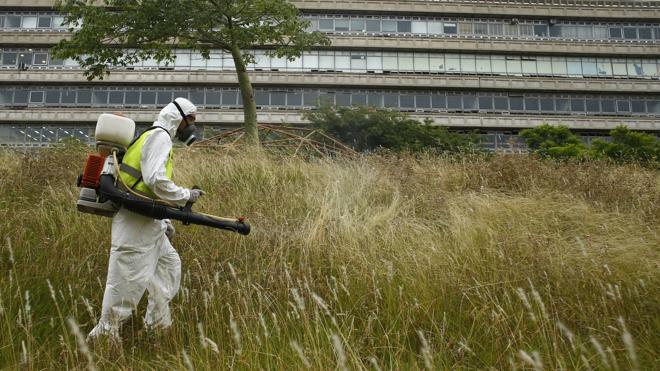La OMS necesitará 110 millones de euros en 18 meses para combatir el zika