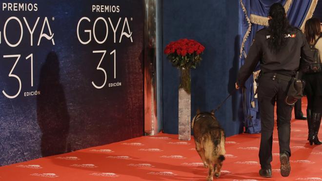 El ladrón de las joyas de los Goya: «Pensé que eran baratijas y las cogí como recuerdo»