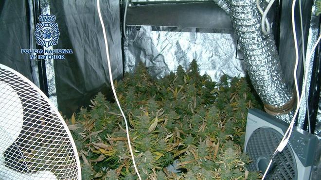 Detenido un joven por cultivar marihuana en una habitación de su casa