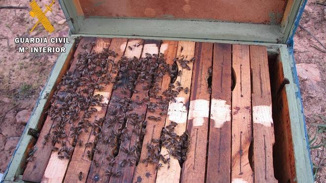Un detenido por hurtar 37 colmenas en Castilblanco