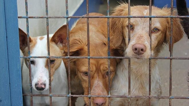 Mejoras en el control de los perros abandonados