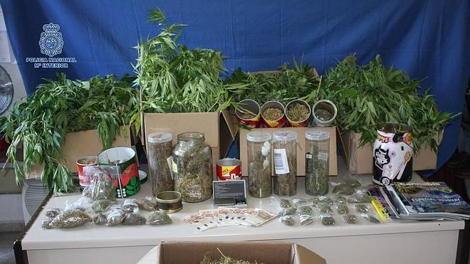 Incautadas 35 plantas de marihuana en el patio de una vivienda