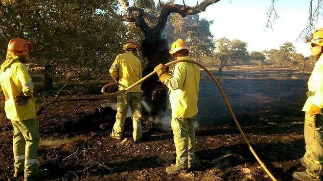 Controlado el incendio de pastos de Valverde de Mérida