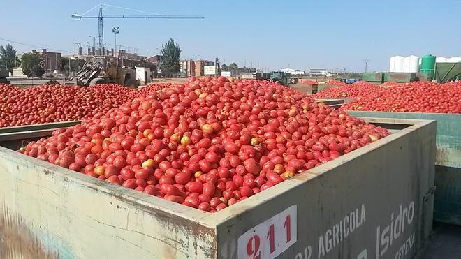 San Isidro cerró este año un contrato de 114 millones de kilos de tomate
