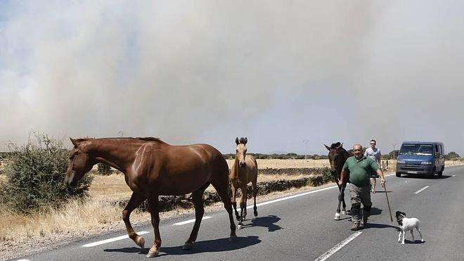 Un incendio en Oliva de Plasencia obliga a desalojar naves y viviendas