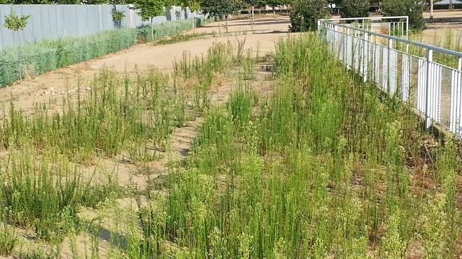 Denuncian el estado «lamentable» del parque de las Albercas