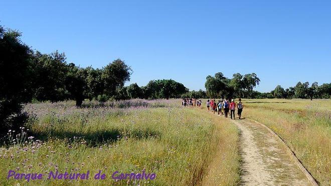 Marcha senderista por Cornalvo el día 30