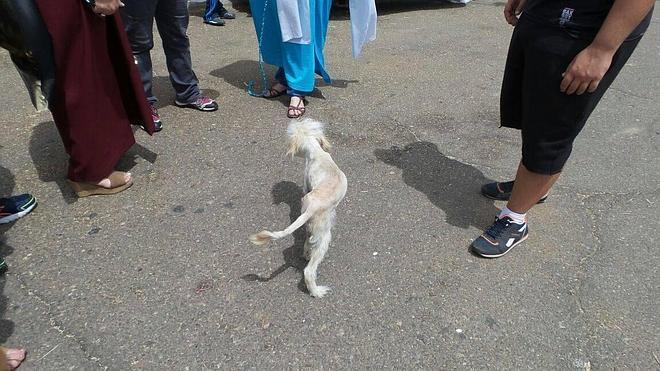 Animaex advierte del aumento de perros abandonados