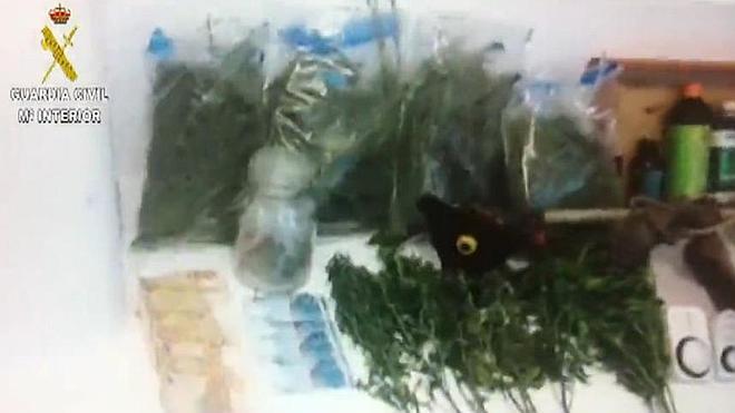 Desmantelan un punto de cultivo y venta de marihuana en Belvís de Monroy