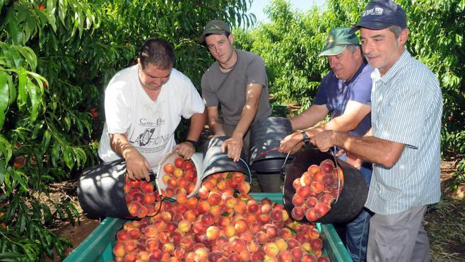 La fruta de hueso resiste y abre nuevos mercados