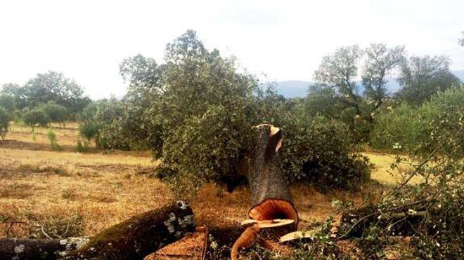 SEO/BirdLife denuncia que hay dehesas amenazadas por cultivos y talas irregulares