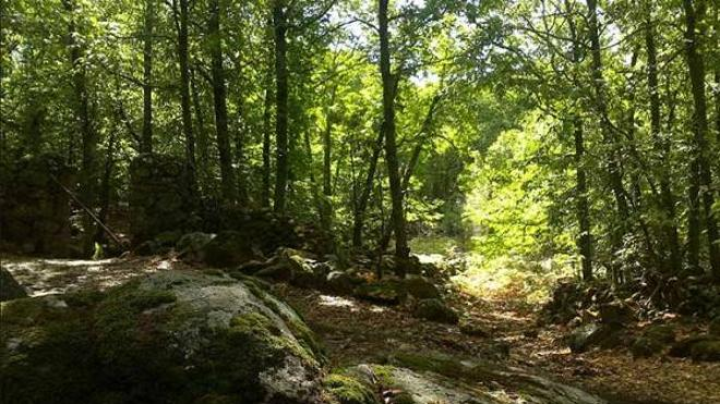 La III Ruta de la Castañas, el sábado por la Sierra de Montánchez