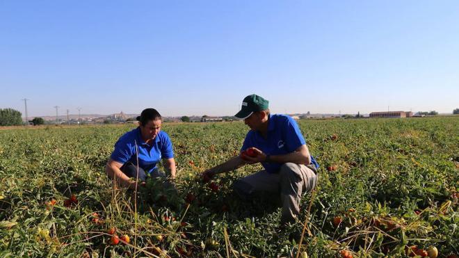 Los expertos piden normas contra las prácticas desleales en la cadena alimentaria
