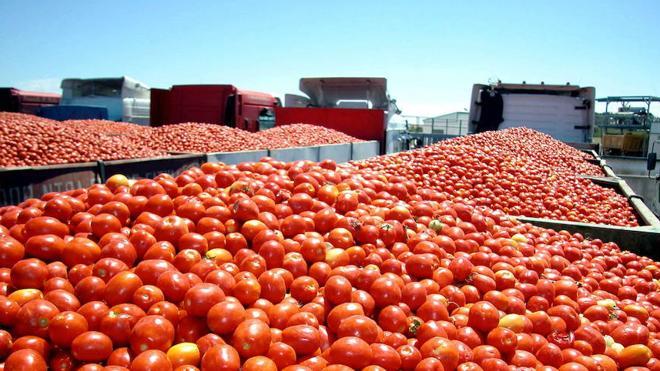 Agroexpo, que se celebrará del 25 al 28 de enero, tendrá al tomate como cultivo estrella