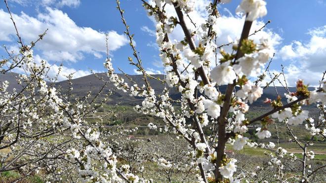 Cuatro rutas en bus recorrerán el Valle del Jerte durante la floración