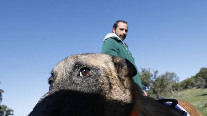 Un equipo canino para acabar con los envenenamientos