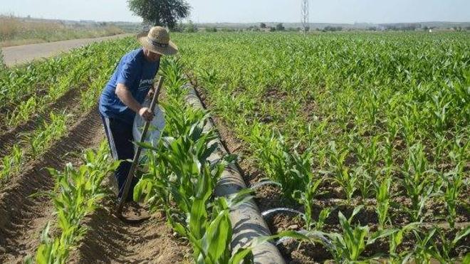 Investigadores plantean sustituir el cereal por otros cultivos como quinoa o colza
