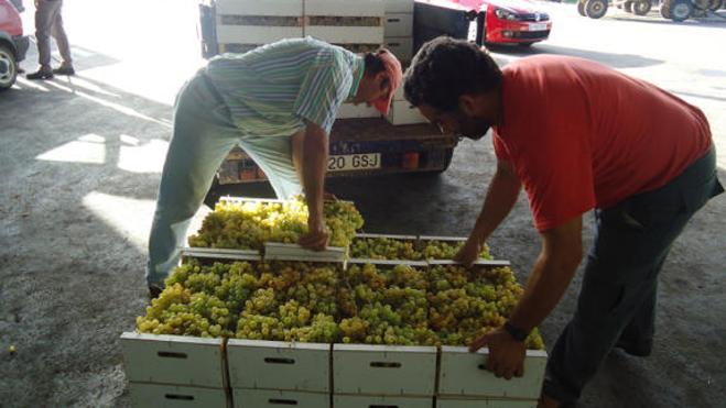 500.000 euros en ayudas para reestructurar el sector cooperativo agroalimentario