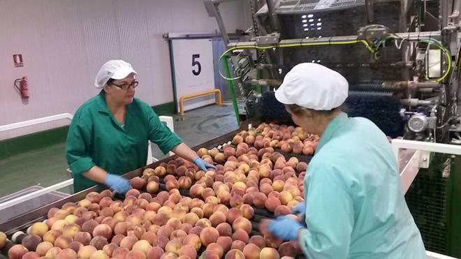 La Junta presentará el 12 de mayo el Plan Estratégico para el sector frutícola