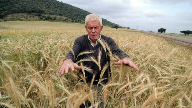 El cereal no arraiga por la brusca caída de la producción y los bajos precios