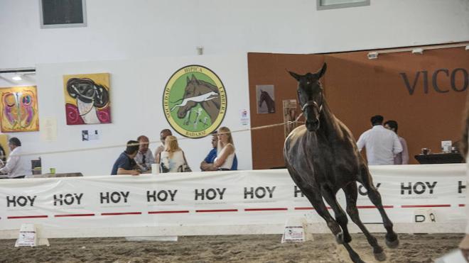 Ecuextre contará del 8 al 11 de junio con 250 caballos de distintas razas