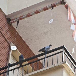 Las palomas emigran a los barrios