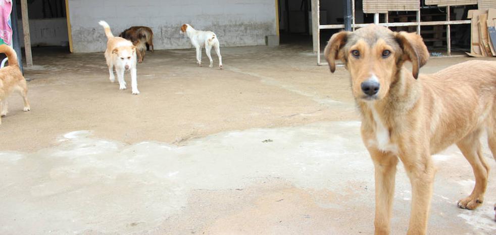 El Refugio de Brown se concentrará el 20 de marzo para evitar desaparecer de Zafra