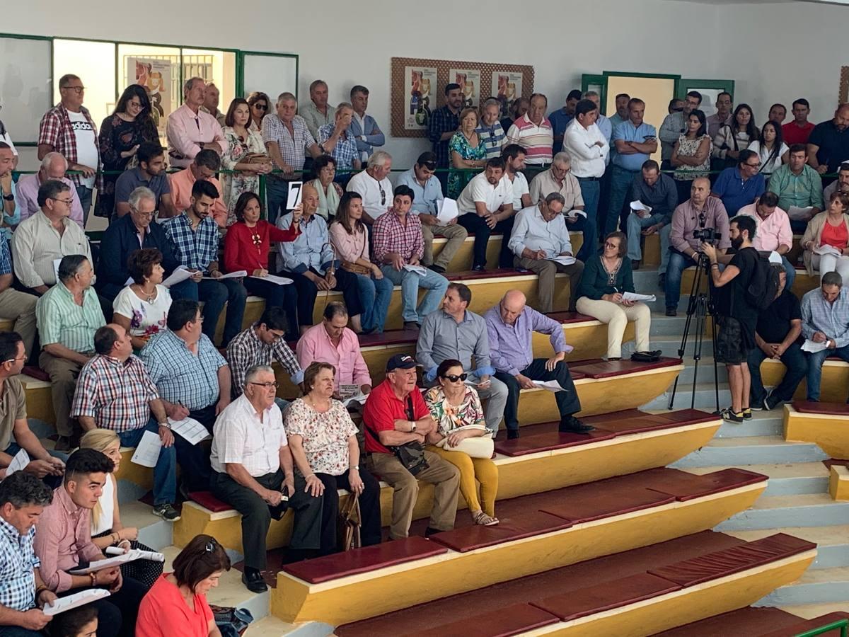 Éxito total en las subastas de ovino en la Feria de Zafra con un remate de 71.590 euros