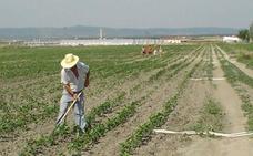 Agricultura crea una bolsa de tierras para cultivar 250 hectáreas de riego en desuso en Zalamea